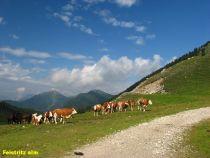 Na typickém almu - letní pastvině