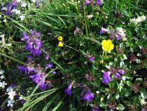 Alpská květena zdobí cestu do údolí